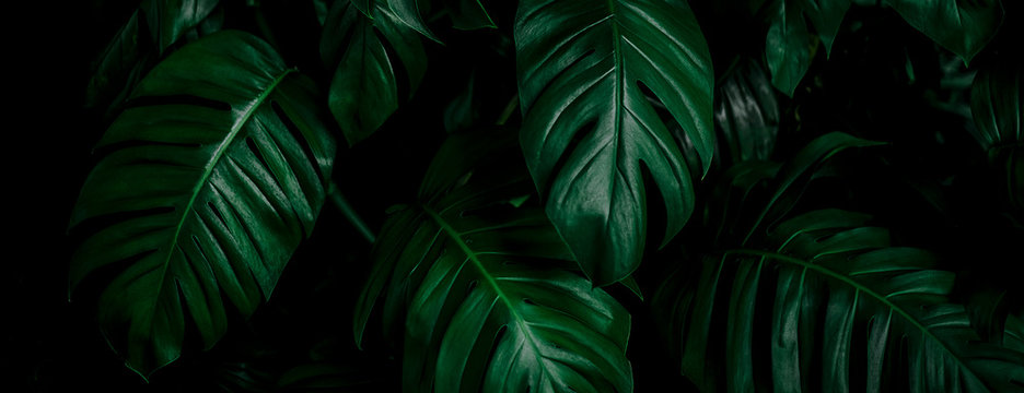 tropical leaf, abstract green leaf texture, nature background