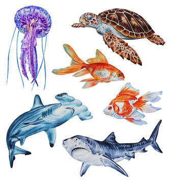 Set of marine life: two sharks, goldfish, sea turtle, jellyfish. Realistic watercolor illustration hand drawing.