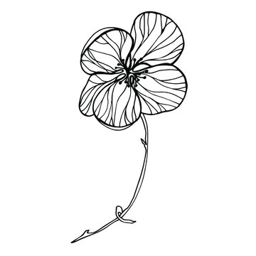 Vector Abutilon. Vector flowers for different design.
