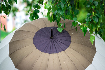 Umbrella with raindrops and wet green leaves in rain