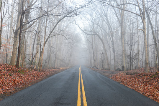 Asphalt road into the foggy forest with yellow road lines