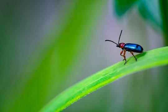 Dreamy bug