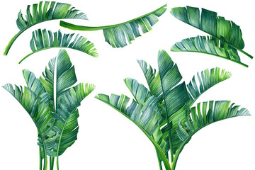 Set of tropical plants, palm leaves,   isolated transparent background, watercolor illustration