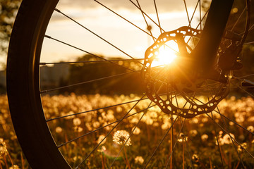 Foto op Canvas Fiets Bicycle wheel in the field at sunset. Close-up of a hydraulic brake disc