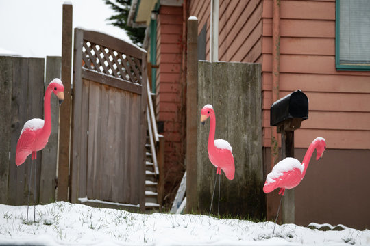 Pink flamingo lawn ornaments on a snow covered front yard
