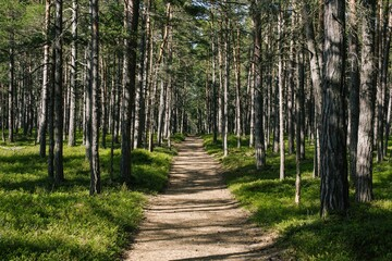 Photo Blinds Road in forest Beautiful scenery of a pathway in a forest with a lot of trees