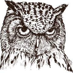 Wall Murals Hand drawn Sketch of animals Hand drawn portrait of owl, isolated on white, vector illustration