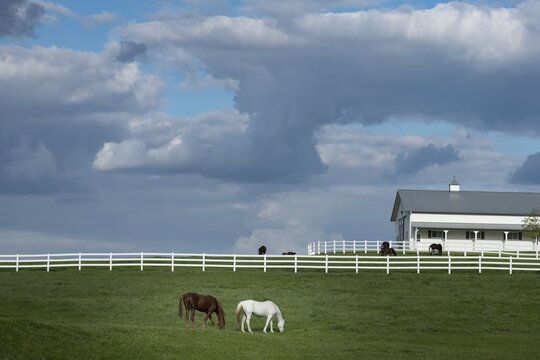 Barn of white and brown horses under the blue cloudy sky