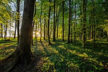 Piękny wschód słońca w nadmorskim parku. Promienie wschodzącego słońca przebijające przez korony drzew.