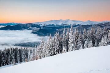 壁紙(ウォールミューラル) - Awesome view of the fairy-tale woodland. Location Carpathian mountains, Ukraine, Europe.