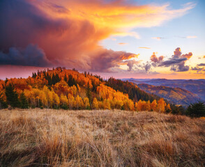 Wall Mural - Splendid sunset in the autumn alpine highlands. Location place Carpathian mountains, Ukraine, Europe.
