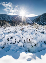 Wall Mural - Alpine valley is full of snow on a frosty day. Location Carpathian mountains, Ukraine, Europe.