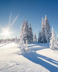 Wall Mural - beautiful winter trees