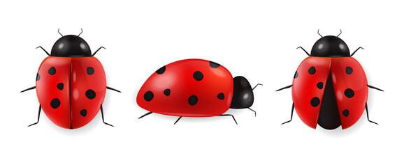 Fototapeta Realistic ladybug set isolated, hello spring, red insect, beauty ladybug detail, white background vector obraz