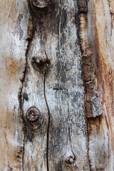 Fototapeta Tekstura drewna zbliżenie na powierzchnię, zbliżenie na muchę  obraz