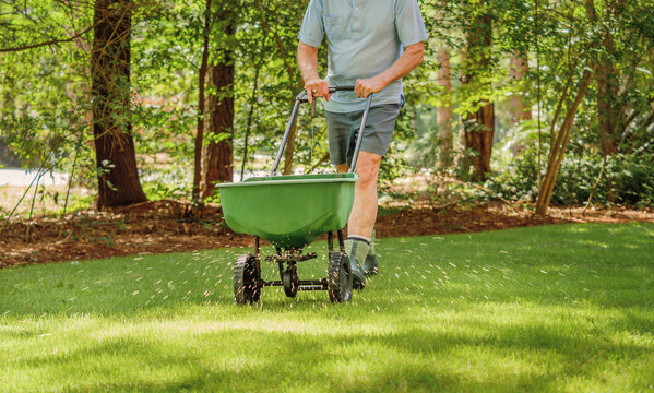 Man fertilizing and seeding residential backyard lawn with manual grass fertilizer spreader.