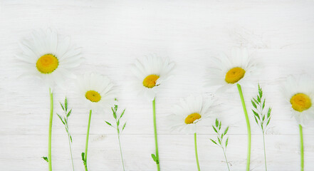 Daisies on white wooden board, copy space
