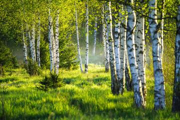 Obraz Spring green foliage - fototapety do salonu