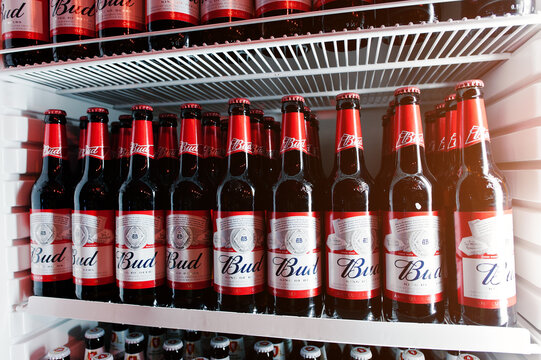 KYIV, UKRAINE - MARCH 25, 2016: Bud beer bottles in the fridge.