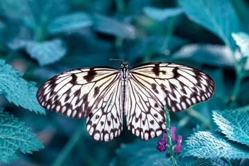 Closeup beautiful butterfly in a summer garden