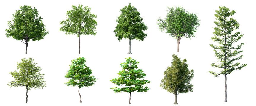 Collection Beautiful 3D Trees Isolated on white background , Use for visualization in architectural design