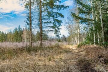 romantischer Waldweg im Frühling