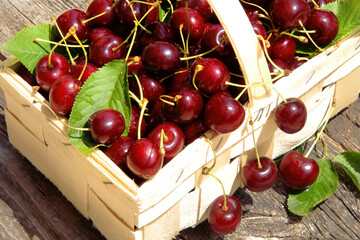 fresh red cherries in basket, copy space