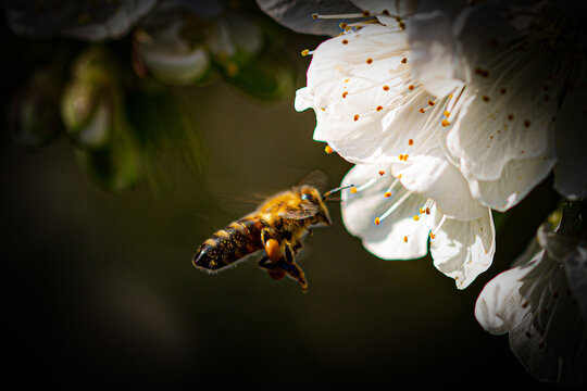 bee on approach
