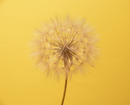 Beautiful flower with a plain background