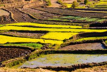 Autocollant pour porte Les champs de riz Impressive landscape in the highlands of Madagascar, with terraced rice paddy fields in multiple shades of green