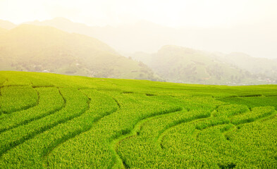 Autocollant pour porte Les champs de riz Green terraced rice field in morning mist.Beautiful sunlight over the paddy fields on mountain background.Natural holiday landscape concept.