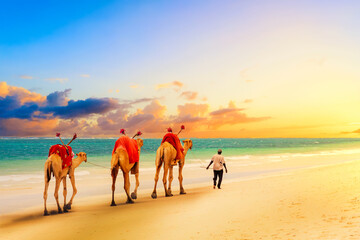 Poster Chameau Camels at African sandy Diani beach, Indian ocean in Kenya, African landscape during sunset