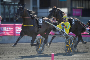 The horse Earl Simon with driver Franck Ouvrie win the first trial race in the Elitloppet trotting event at Solvalla track without an audience due to the coronavirus disease (COVID-19) outbreak, in Stockholm