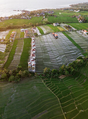 Aerial view of a ricefield in Canggu, Bali