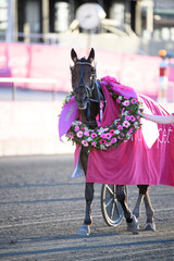 The horse Propulsion wins with driver Orjan Kihlstrom the final of the Elitloppet trotting event at Solvalla track without an audience due to the coronavirus disease (COVID-19) outbreak, in Stockholm