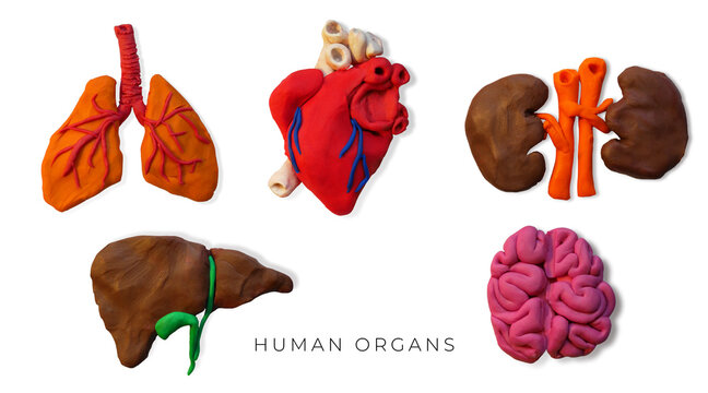 Set of plasticine handmade human organs icons.