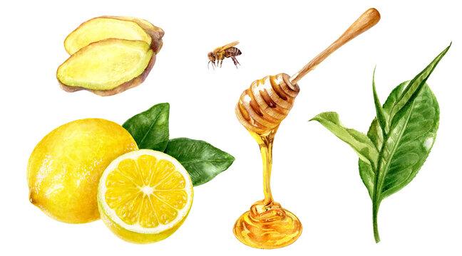 Tea leaves lemon honey ginger watercolor illustration isolated on white background