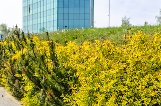 Green pine and yellow bushes on the parking in front of the modern corporate building. Sustainabilty, eco friendly business concept.
