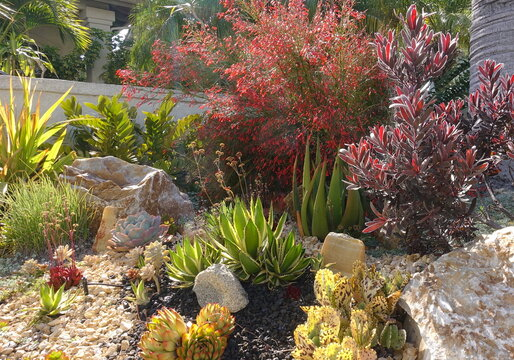 A gorgeous xeriscape with a variety of flowering plants and decorative rocks.