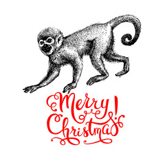 Hand drawn monkey animal vector illustration. Merry Christmas and Happy New Year card. Sketch isolated marmoset on white background