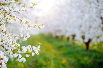 壁紙(ウォールミューラル) - Spectacular ornamental garden with blooming lush trees in the sunny day.