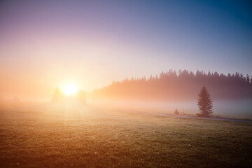 壁紙(ウォールミューラル) - Idyllic misty pasture in the sunlight. Locations place Durmitor National park, Montenegro, Balkans, Europe.