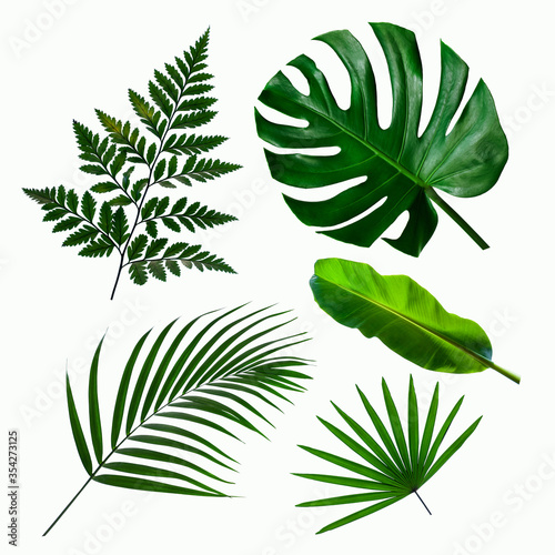 Wall mural set of green monstera palm and tropical plant leaf on  white background for design elements, Flat lay