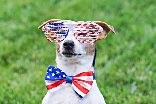 Portrait of proud dog in stars and stripes sunglasses with American flag bow tie on green background. Celebration of Independence day, 4th July, Memorial Day, American Flag Day, Labor day party event