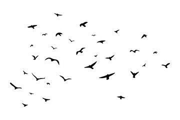 A flock of flying birds. Vector illustration. EPS 10 Fotobehang