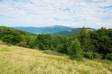 Wall Mural - green nature landscape in mountains. beautiful scenery with beech forest on the hill. high peak in the distance. beauty of carpathian ridges. cloudy weather