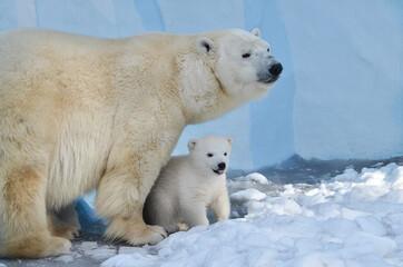 Deurstickers Ijsbeer polar bear cub