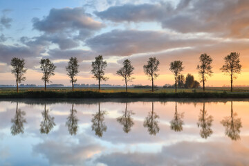 Wall Mural - tree row reflected in river at sunrise