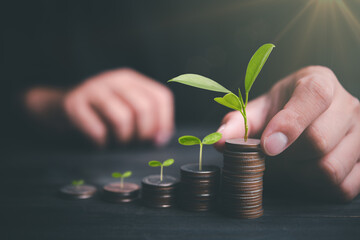 Investor hand with coin and plant growing putting coins to stacking for money saving profit and business investment growth concept.