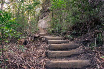 Hiking trail with wooden log staircase, steps